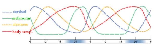 Slide1 circadian rhytm