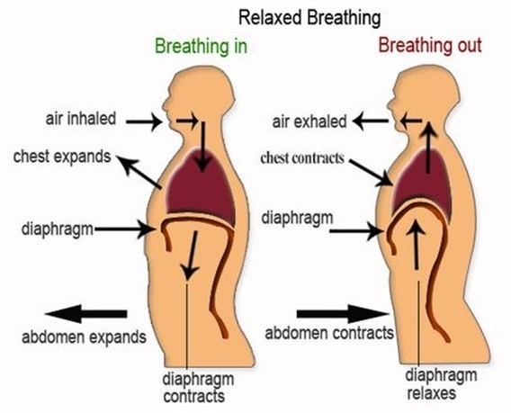 Breathing reduces acid reflux and dysmenorrhea discomfort | the